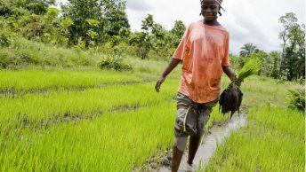 jeunes dans l'agribusiness