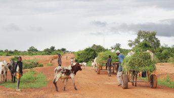 Stratégies d'adaptation des agriculteurs